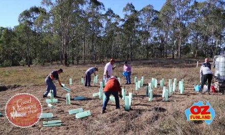 Saving the Endangered Cumberland Plain Woodland