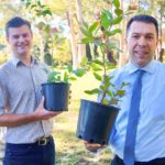 Plant A Tree for Wild Koala Day