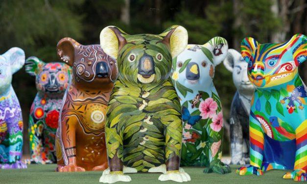 Hello Koalas comes to Campbelltown