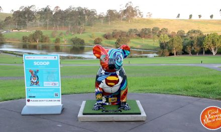 Meet the Hello Koalas